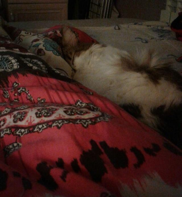 Кайфует в одеяле.