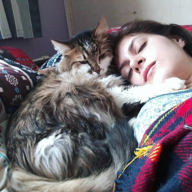 прибалдевший кот