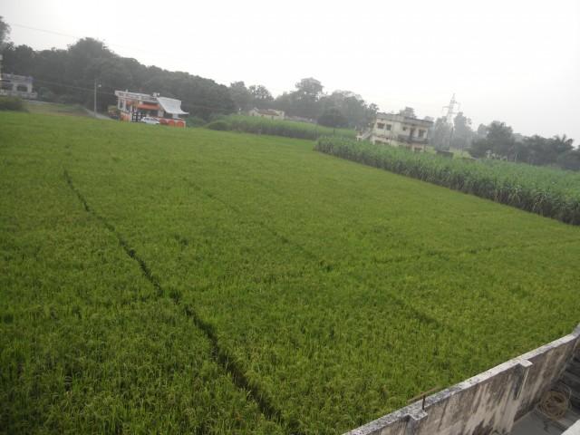Соседские огороды