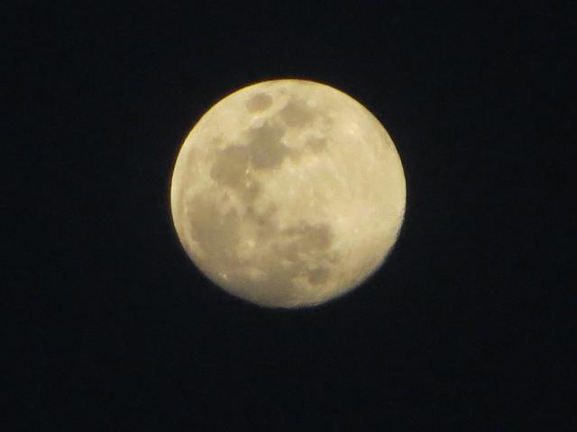 посмотри на луну: она похожа на маленькую принцессу с жёлтой вуалью