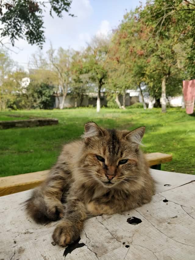 Котик на зелёном (без обработки)