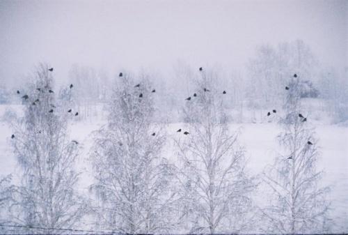 каждой вороне - своя ветка