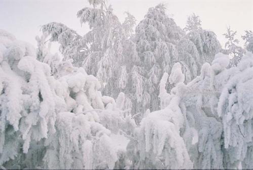 снежная тяжесть