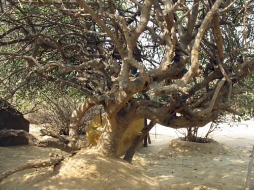 Дерево в Нидхуване