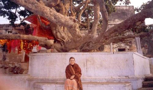 С этого дерева Кришна сиганул в Ямуну.
