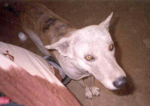Ко мне во Вриндаване постоянно подходили собаки и преданно смотрели в глаза :)
