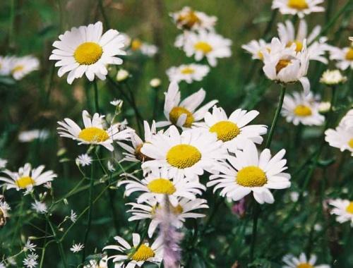 И цветов вам дикорастущих, но добродушных