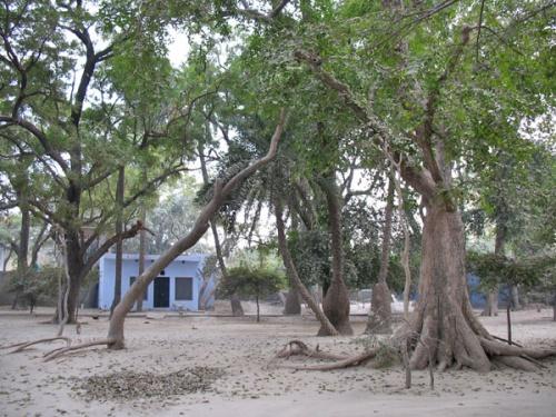 Татьястхан - место во Вриндаване, где еше сохранилась природа Вриндавана.