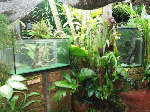 Snake House. Террариумы со змеями