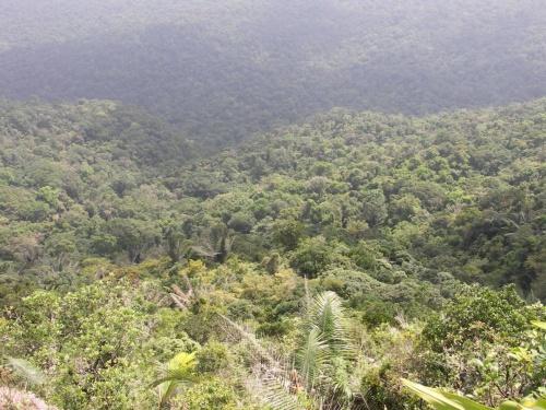 внизу джунгли