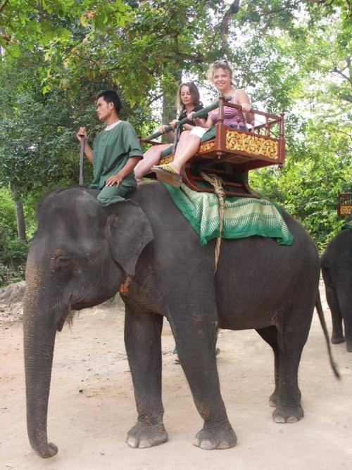 До храма Байон можно доехать на слоне