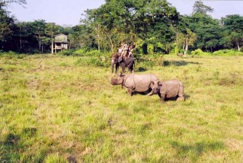 Читван,носороги и слоник