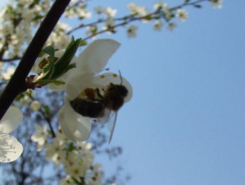 Пчёлка-2