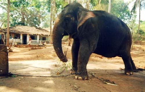 слон раз