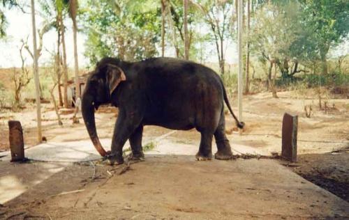слон два
