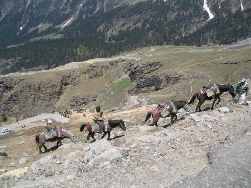 Лошадки быстрее джипов - амплитуда меньше