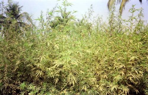 трава зеленая :)