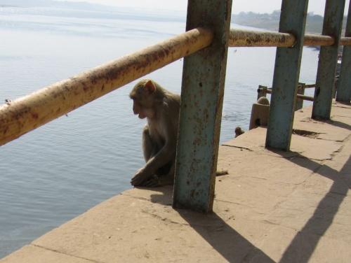 мое обезьянье воплощение