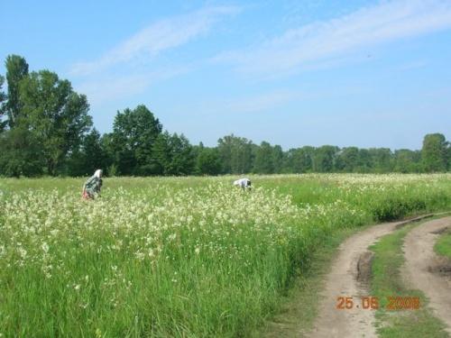 Время сбора трав