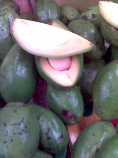 Агуакате /авокадо/