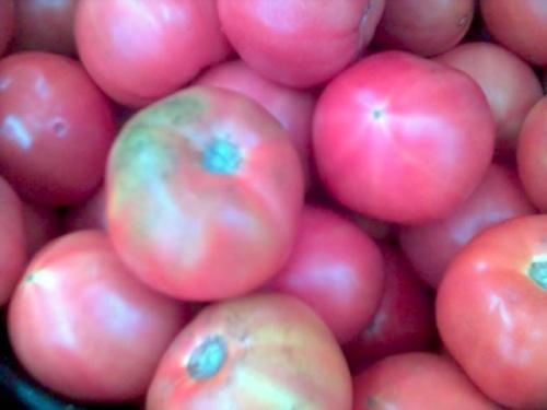 Помидоры хидропонные-очень безвкусные-как яблоки твердые.