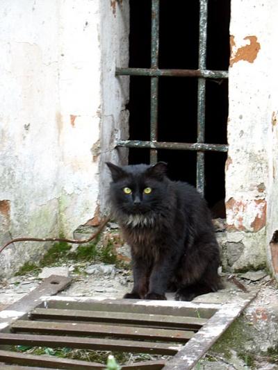 А это толстый кот, которого мы обнаружили во дворе церкви