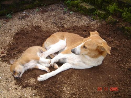 Собачки. Мама и дитя.