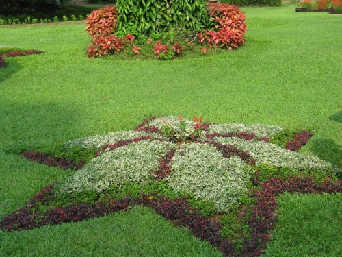 Перадения. Ботанический сад. Клумба - звезда.