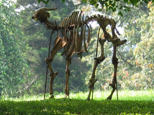 Перадения. Ботанический сад. Встретился скелет..Кто-то догулялся...