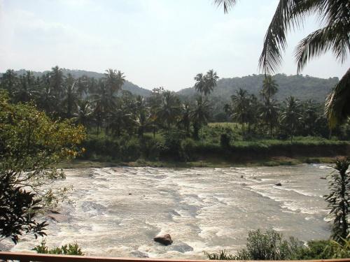 Пинавелла. Слоновий питомник. Теперь на реку, купаться.