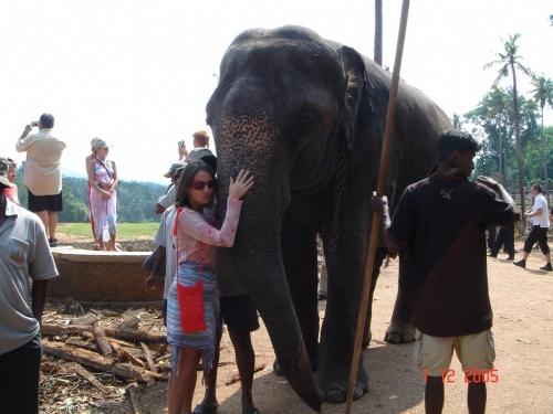 Пинавелла. Слоновий питомник. Я и слон.