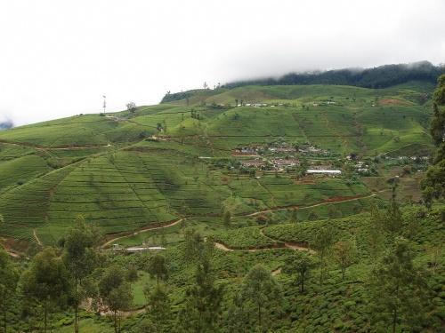 Опять чайные плантации и непосредственно г. Нувара Элия