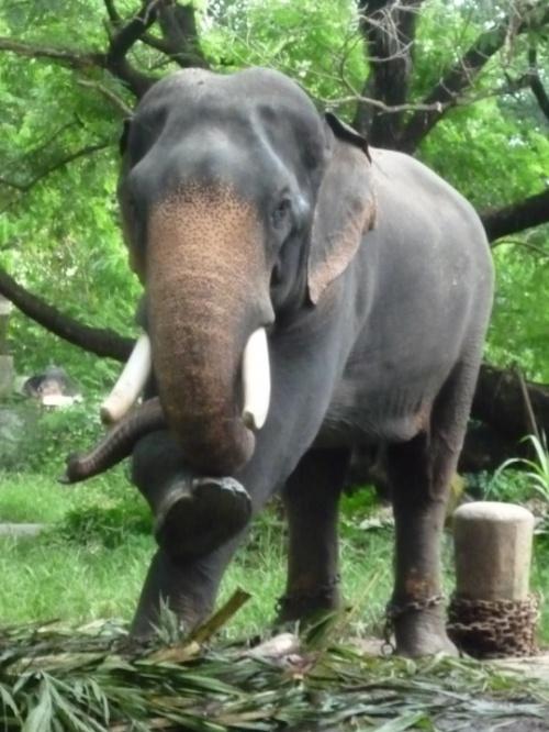 Йога слон