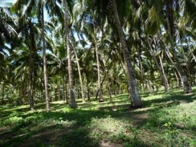 Поющие пальмы