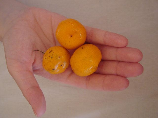 маааленькие мандарины