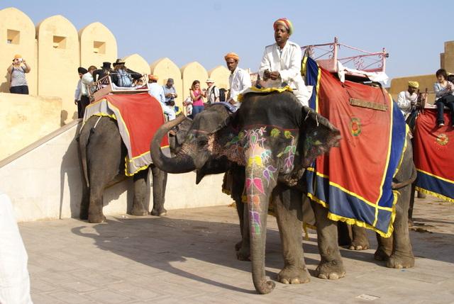 Гламурные слоны в утренний час