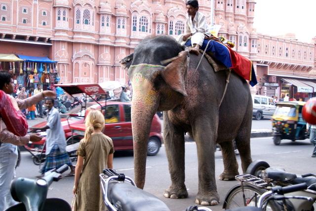 Слон на улицах Джайпура знает правила дорожного движения