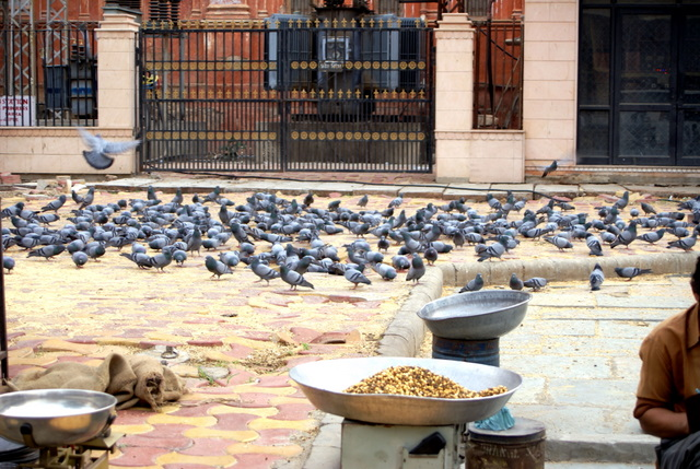 Голуби ждут угощения