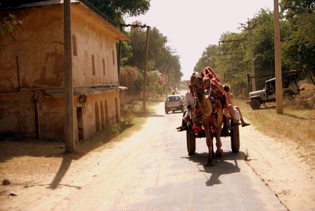 Сафари на верблюдах по пыльной дороге в Самод