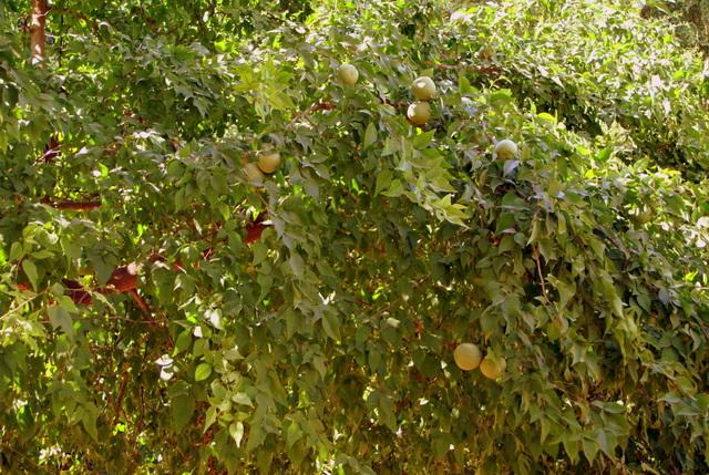 По дороге можно угоститься фруктами