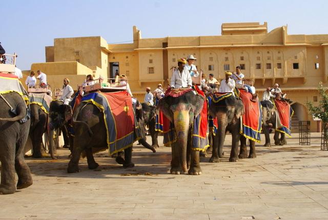 Целый день слоны возят туристов и глаза у них грустные
