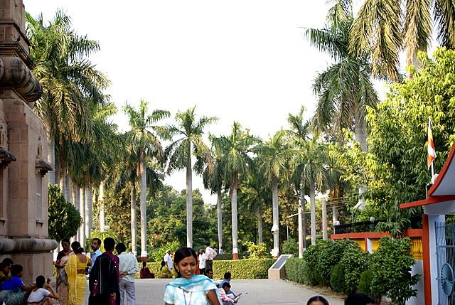 Стройные пальмы