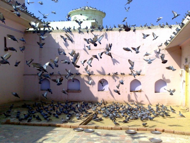 В храме всегда есть люди, которые подкармливают голубей