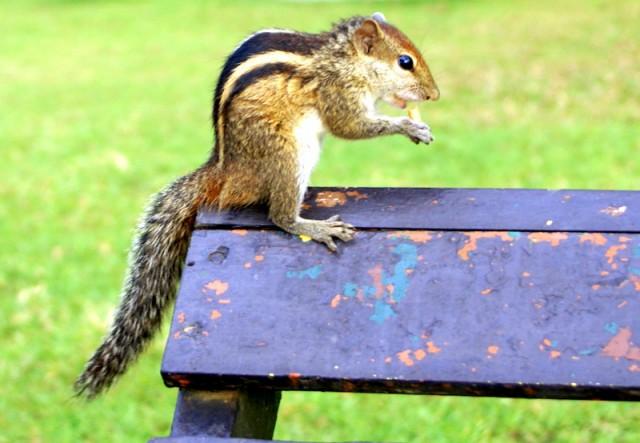 Любят орешки и сухарики