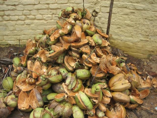 Вот в такие груды мусора потом превращаются эти экзотические фрукты, что падают прямо на землю. Потом это добро вывозят мусорные машины.