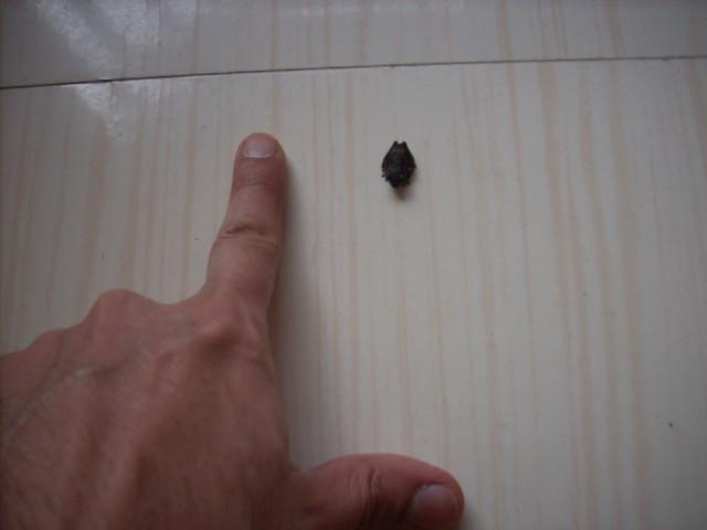 Вот такой лягушонок запрыгнул на мой балкон )))