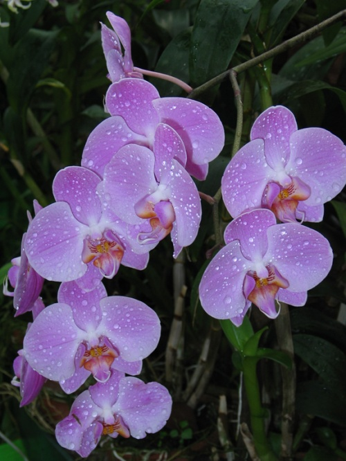 Орхидеи для тебя!