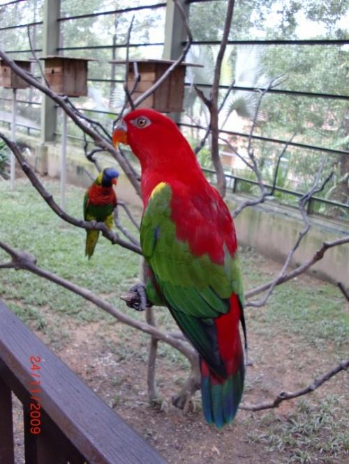 В  парке птиц КЛ