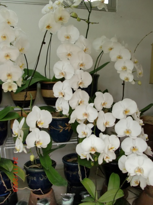 В парке орхидей КЛ