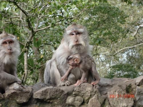 Семейство обезьян
